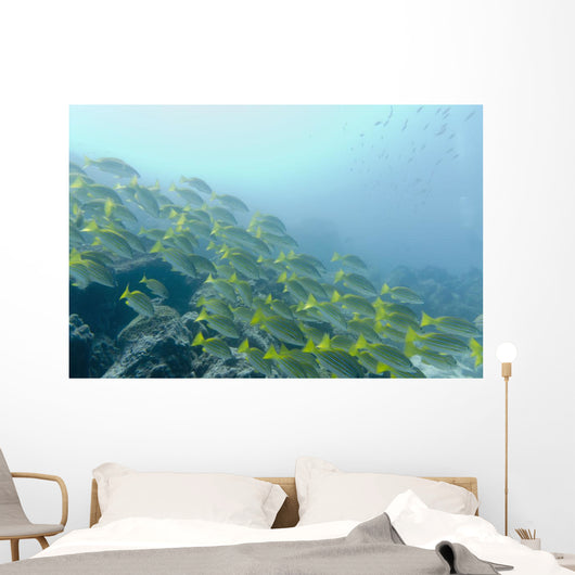 A School Of Fish Swimming Underwater Wall Mural