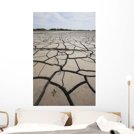 Large Cracks In The Earth From Dry Ground Wall Mural