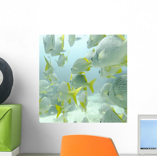 A School Of Yellow-Tailed Grunt Fish Swimming Underwater Wall Mural