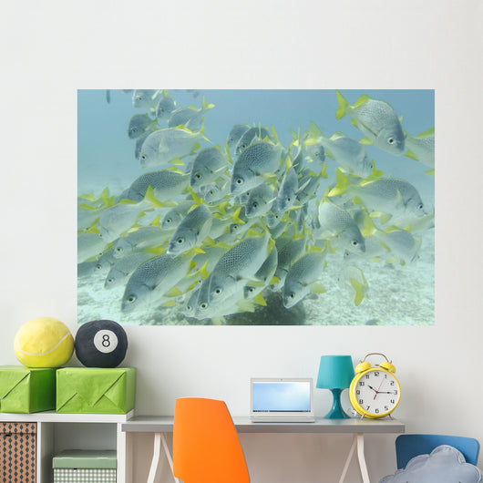Yellow-Tailed Grunt Fish Wall Mural