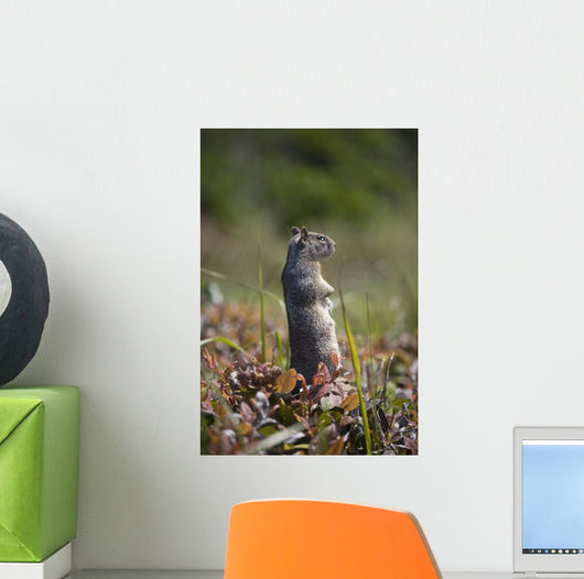 Ground Squirrel Standing In A Field Wall Mural