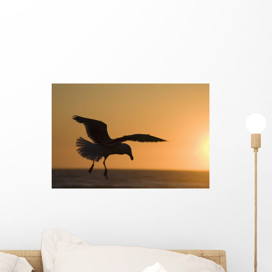 Silhouette Of A Seagull In Flight At Sunset Wall Mural