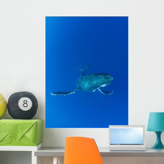 Hawaii, Maui, Humpback Whale In Ocean Underwater Wall Mural