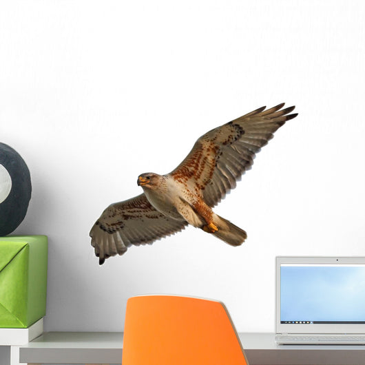 Ferruginous Hawk Isolated Wall Decal