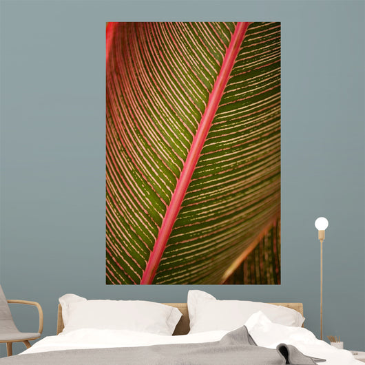 Hawaii, Maui, Variegated Ti-Leaf Plant Wall Mural