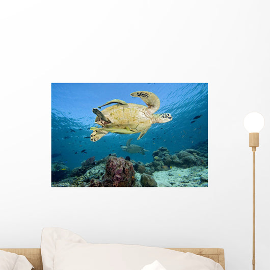 Swimming Over Reef Wall Mural