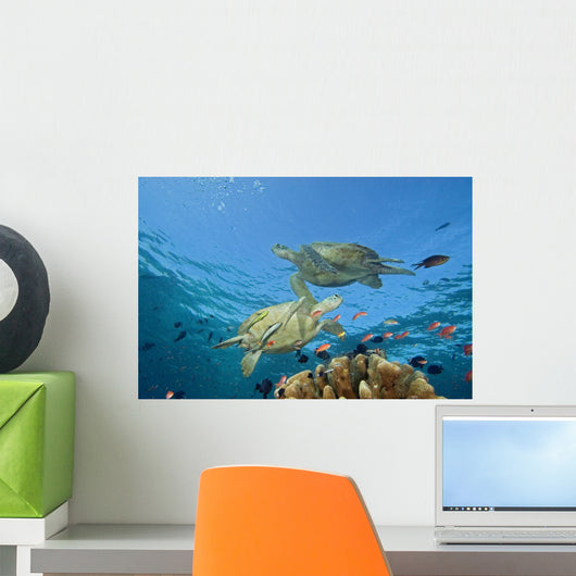 Two Green Sea Turtles Swim Over Coral Reef With Fish Wall Mural