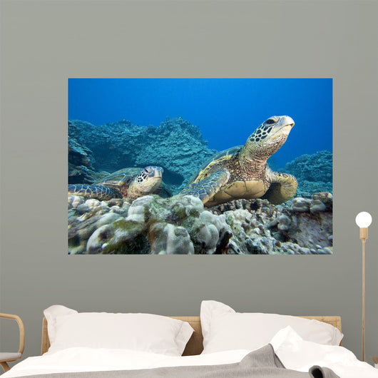 Hawaii, Two Green Sea Turtles On Colorful Coral Reef Wall Mural