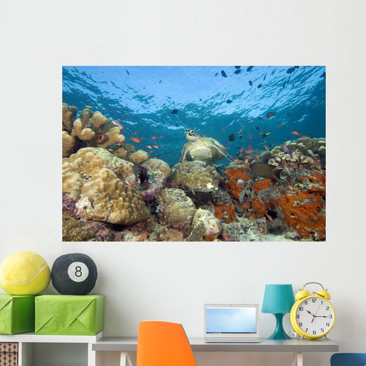 Green Sea Turtle On Colorful Coral Reef With Schooling Fish Wall Mural