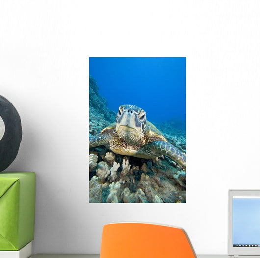 USA, Close-Up of Green Sea Turtle on reef Wall Mural