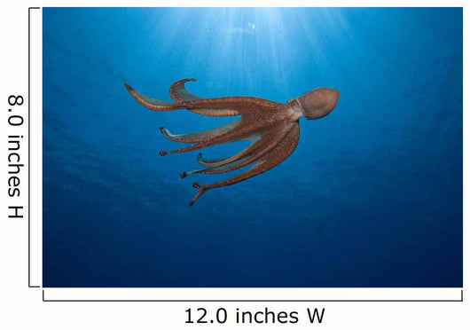 USA, Day Octopus swimming Wall Mural