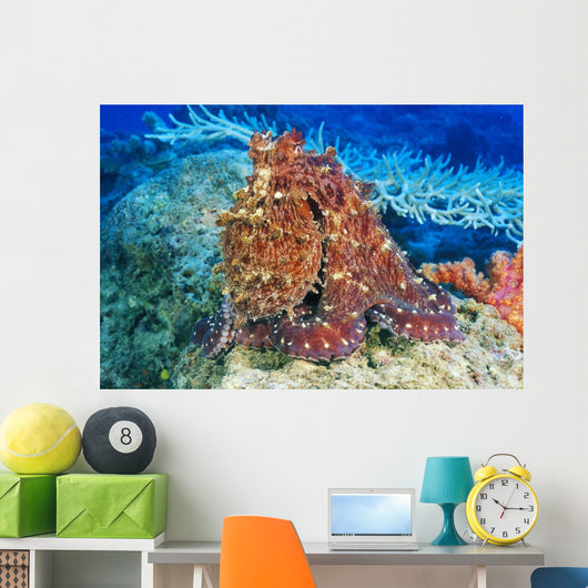 Day Octopus on coral Wall Mural