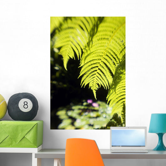 Hawaii, Close-Up Of Bright Green Hapu Ferns Wall Mural