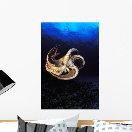 USA, Day Octopus swimming in Ocean Wall Mural