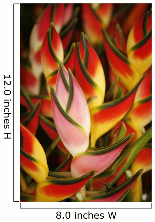 Hawaii, Big Island, Hilo, Close-Up Of Bunch Of Heliconia Wall Mural