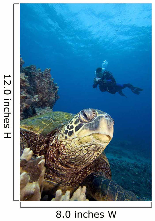 Hawaii, Diver Photographing Green Sea Turtle Wall Mural