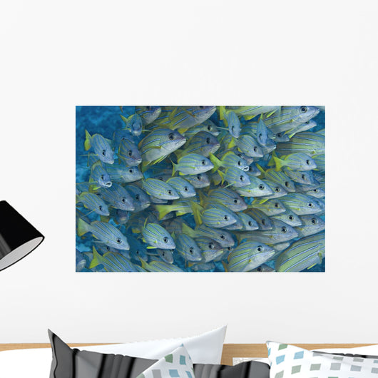 Hawaii, School Of Bluestripe Snapper Wall Mural