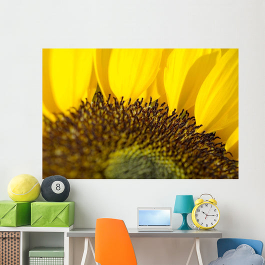 Sunflower, Extreme close-up of center and yellow petals Wall Mural