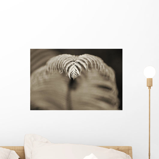 Hawaii, Big Island, Closeup of hapu'u tree fern tip, Selective focus Wall Mural