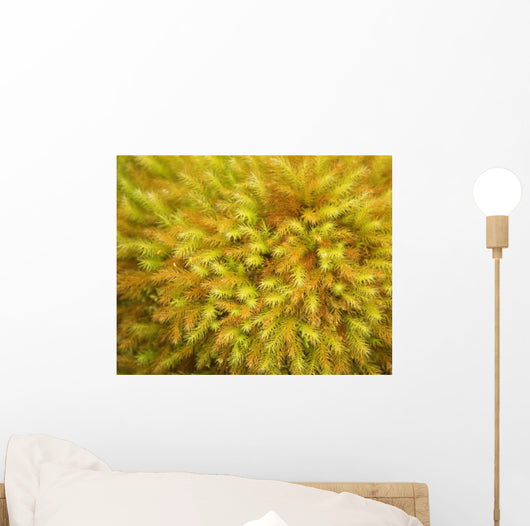 yellow moss on forest floor Wall Mural