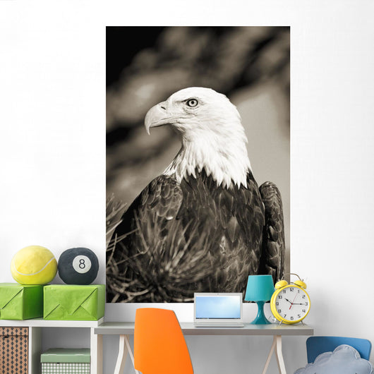 Close-up of Bald Eagle sitting in ponderosa pine tree with head turned Wall Mural