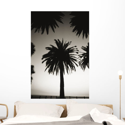 Silhouetted palm tree centered between other palm tree tops at dusk Wall Mural