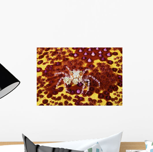 Crab on bright yellow and red background Wall Mural