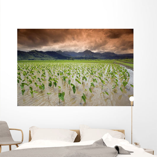 USA, Hawaii, Kauai, Taro field at afternoon Wall Mural