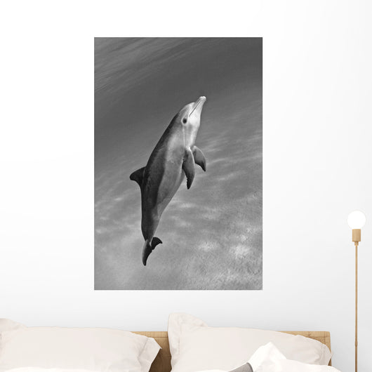 Atlantic Bottlenose Dolphin In Clear Ocean Water Wall Mural