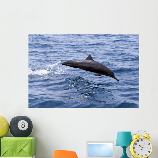 Guatemala, Puerto Quetzal, Spinner Dolphin Jumping Wall Mural