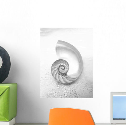 Pearl Nautilus Shell Cut In Half Showing Chambers Wall Mural