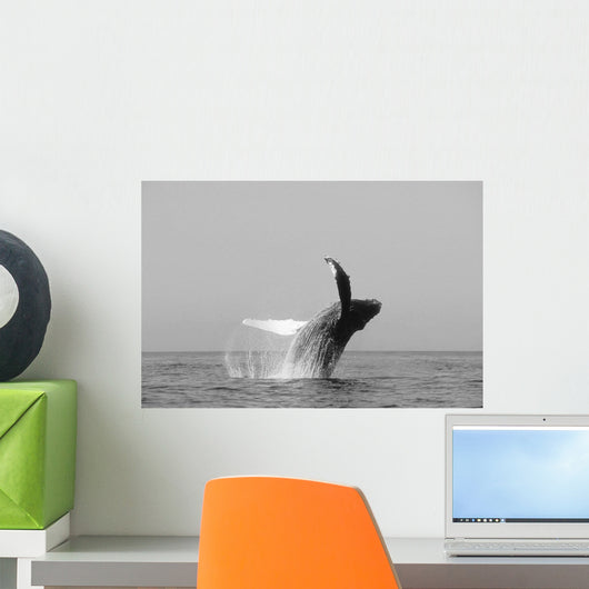 USA, Humpback Whale Breaching Wall Mural