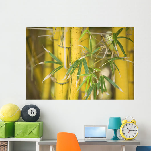 Close-Up Of Bamboo Stalks And Leaves Wall Mural