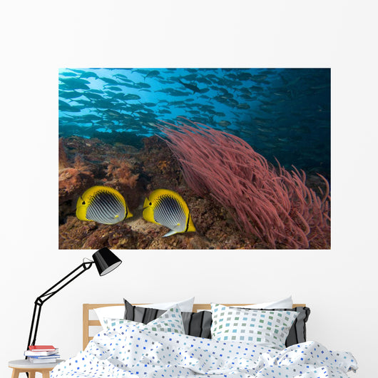 Malaysia, Alcyonarian Coral and pair of Spot-Tailed Butterflyfish Wall Mural