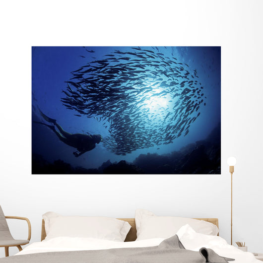Ecuador, Diver and schooling Black Striped Salema Wall Mural