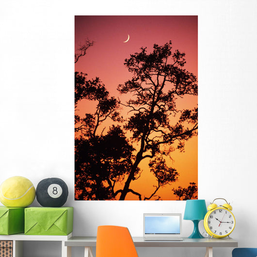 Hawaii, Tree Silhouetted Against Colorful Sunset, Crescent Moon In Sky Wall Mural