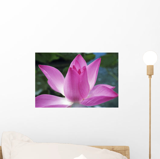 Close-Up Of Pink Lotus Waterlily Bud Wall Mural