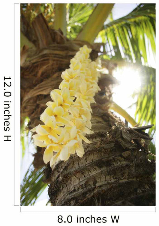 USA, Close-up of yellow Plumeria Lei hanging from palm tree Wall Mural