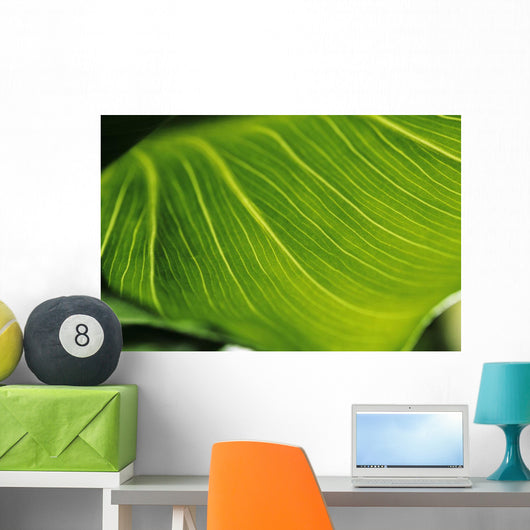 Extreme Close-Up Of Calla Lily Leaf Wall Mural