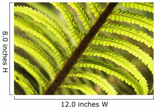 Close-Up Of Tree Fern Frond Wall Mural