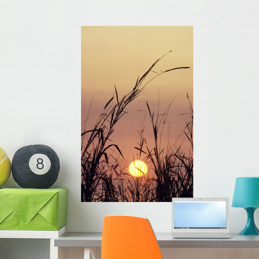 Silhouetted Grass In Foreground Wall Mural