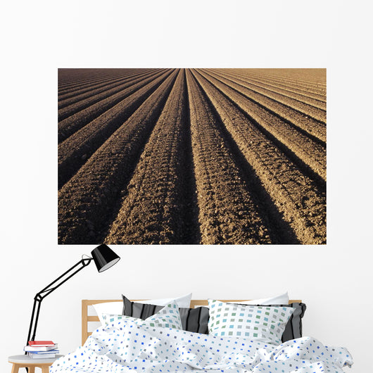California, Field Of Plowed Soil Ready For Planting Wall Mural
