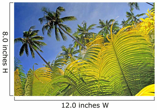 Detail of light green fern leaves Wall Mural