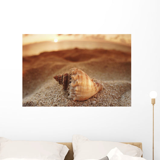 Seashell Laying In The Sand With Sun Setting Behind It Wall Mural