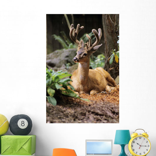 Oregon, Black-Tailed Deer, Wall Mural