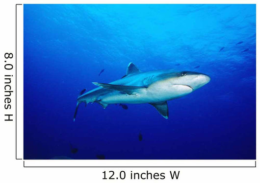 Thailand, Silvertip Shark In Clear Blue Water Wall Mural