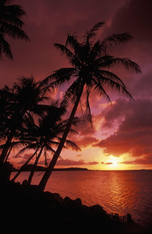 Guam, Tumon Bay, Bright Red Sunset And Silhouetted Palms On Beach Wall Mural