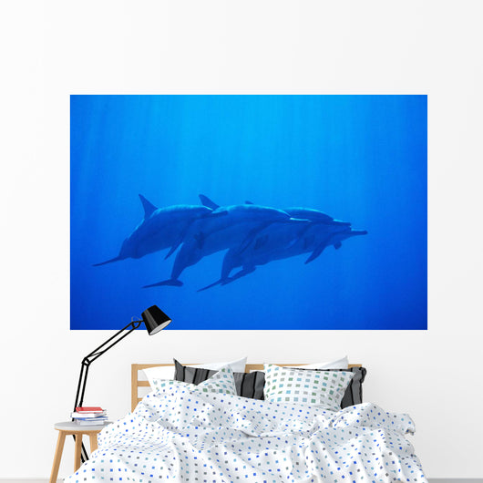 Hawaii, Dolphin Pod Swimming Together Underwater Wall Mural