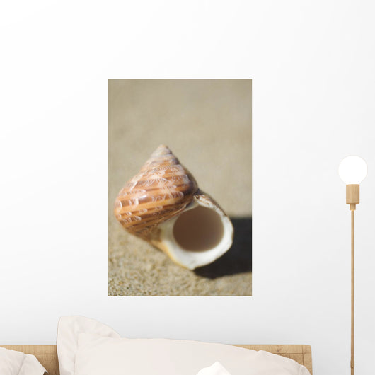 Tapestry Turban Seashell Laying On Sand, Selective Focus Wall Mural
