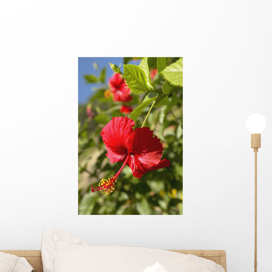 Focus On Bright Red Hibiscus On Flower Bush Wall Mural